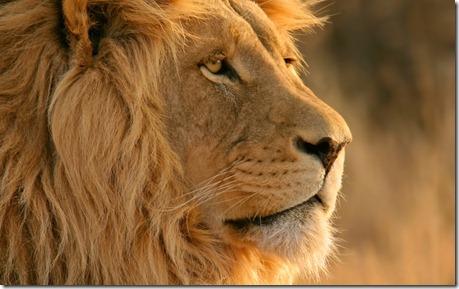 Lion - unpocogeek.com