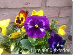 Lumia900VSiPhone4s-2