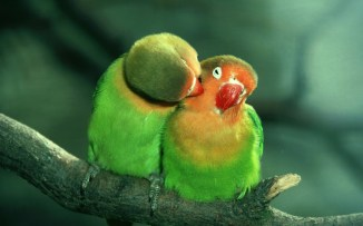 Lovebirds, wildlife park, England