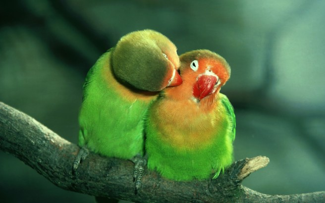 Lovebirds, wildlife park, England