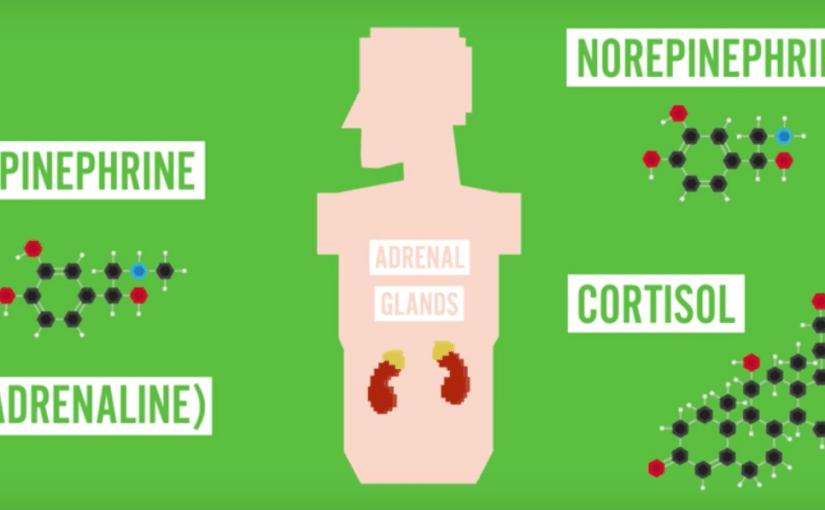 La ciencia detrás de la adrenalina