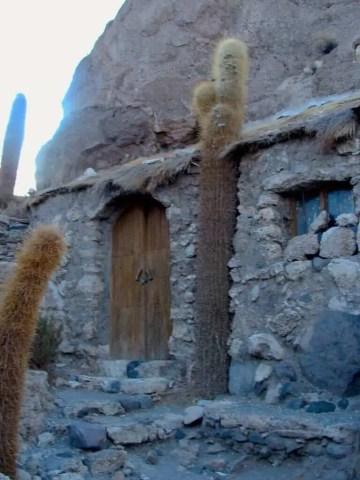 Cactus, maison, Uyuni, Bolivie