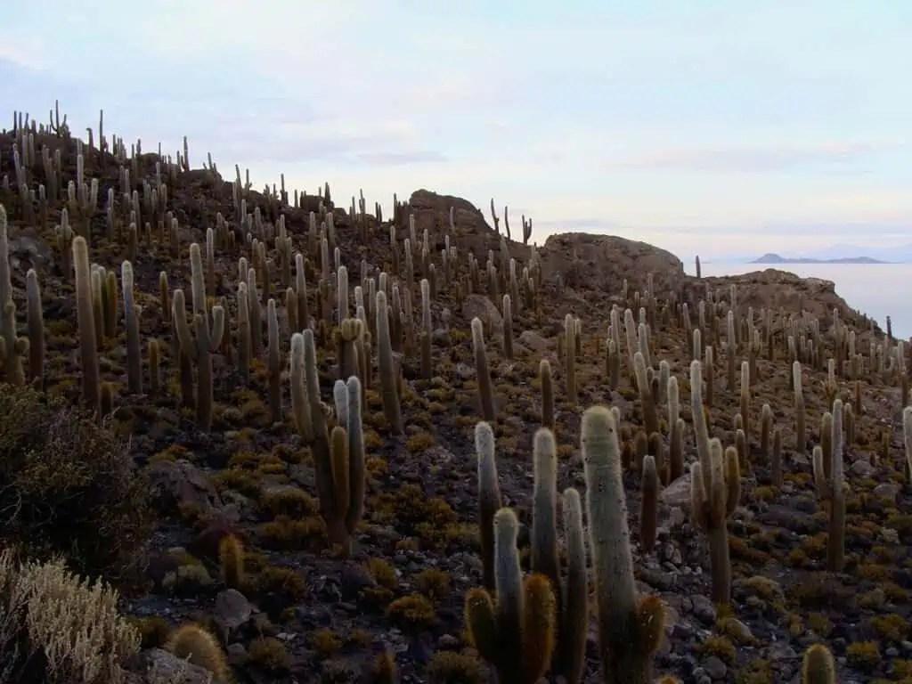 Incahuasi, île de corail, Uyuni, Bolivie