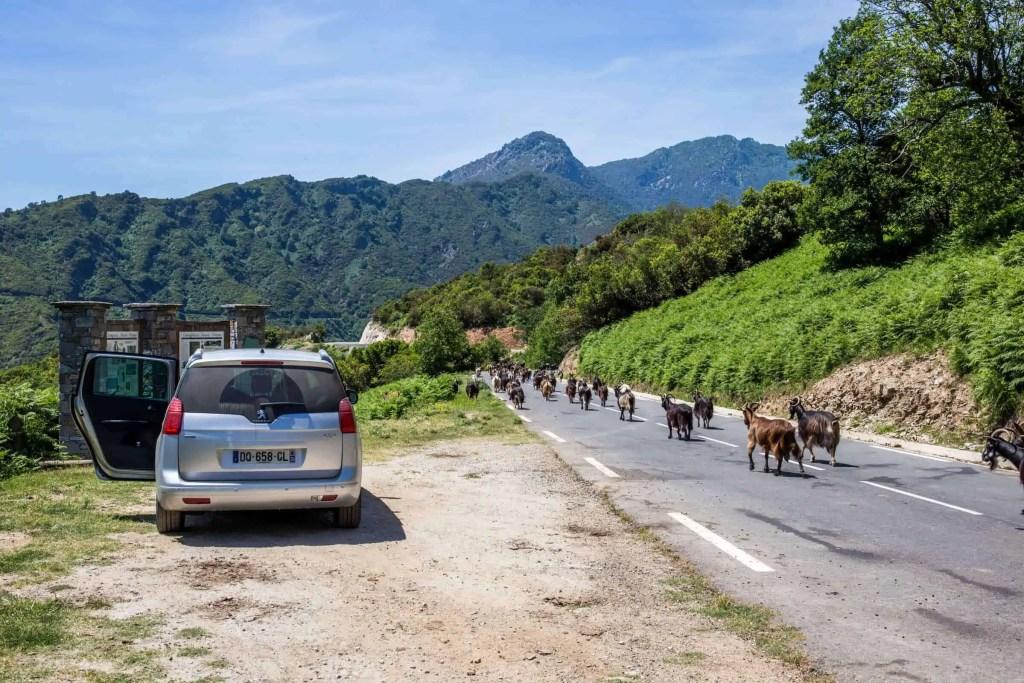 Castagniccia, Corse, roadtrip