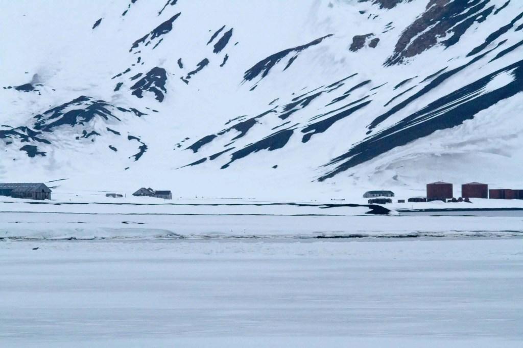 croisière, Antarctique, baleine