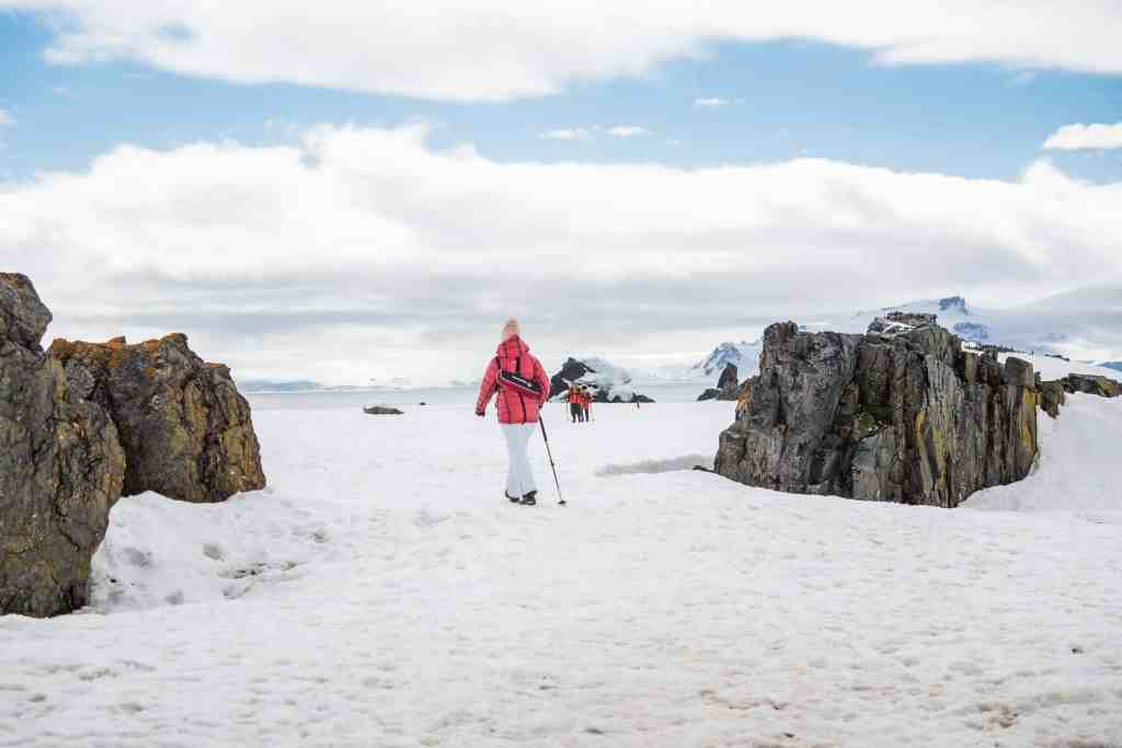 croisière, Antarctique, pingouin, manchot,
