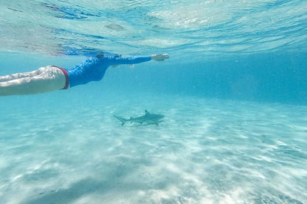 Polynésie, Moorea, croisière, plongée, requin