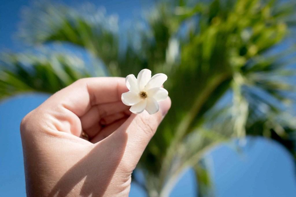 Polynésie, Moorea, croisière