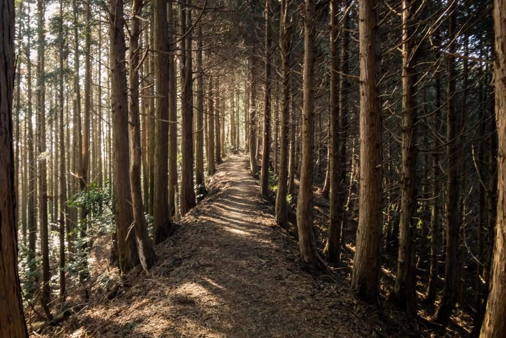 Shikoku, pèlerinage, pèlerin, famille, bébé, Japon, voyage, henro, ohenro, bois, arbre, forêt, chemin, sentier