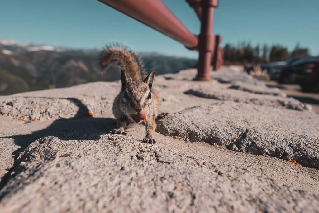 Yellowstone, Grands Parcs, parc national, réserve, nature, USA, Amérique, américain, animaux, roadtrip, visiter, voyage, conseils,