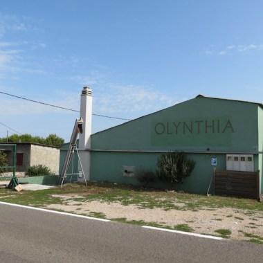 Olynthia1
