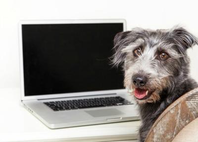 Tidy Dog Computer