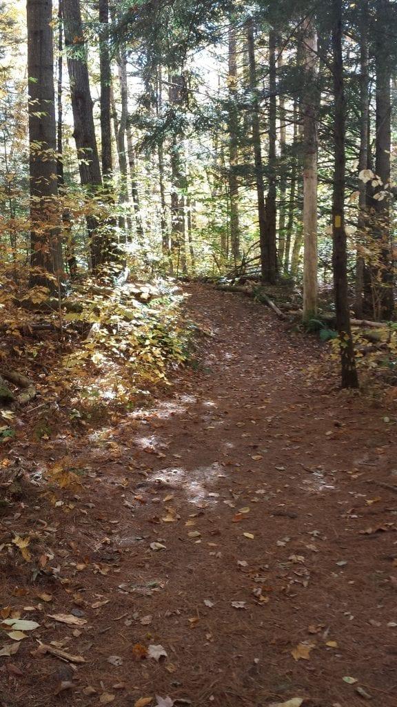 Step Falls hiking trail.