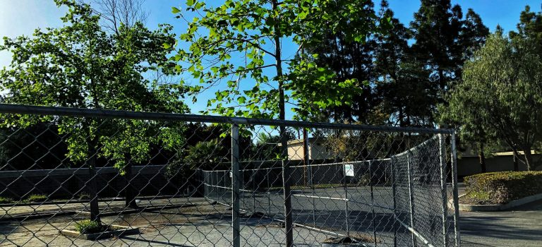 Trees behind a fence