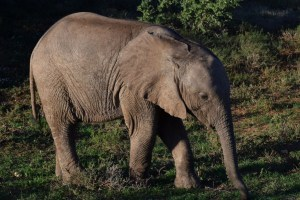 Afrique du Sud (441) (Large)