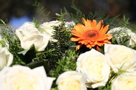 Eine orangene Gerbera inmitten weißer Rosen