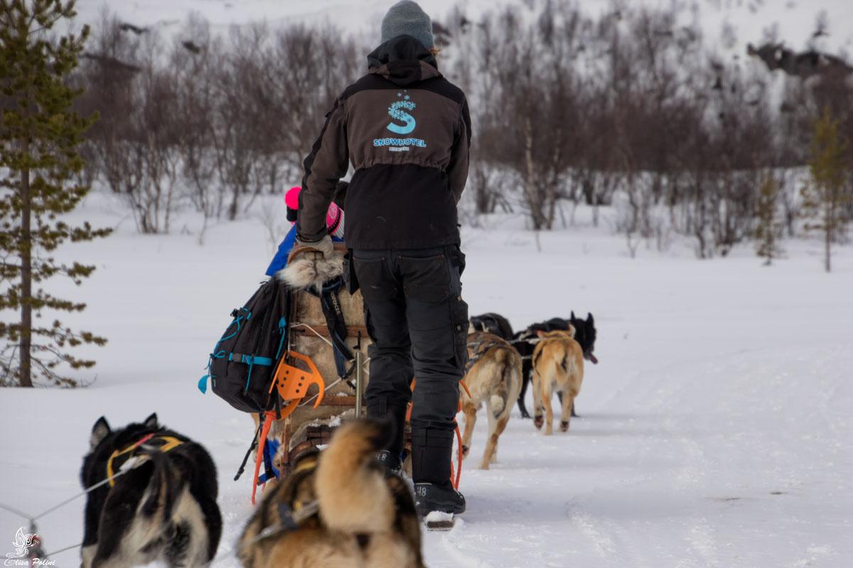 Kirkenes: Husky Safari sul fiordo ghiacciato
