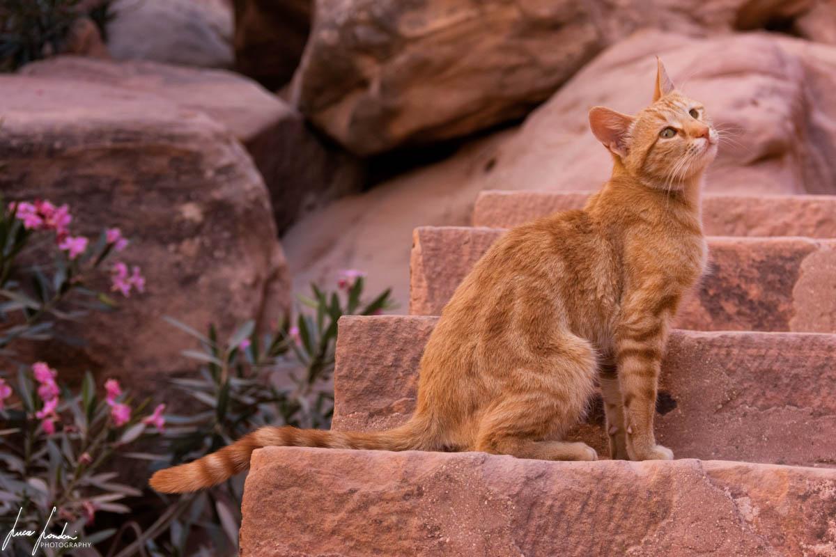 Gatti di Petra