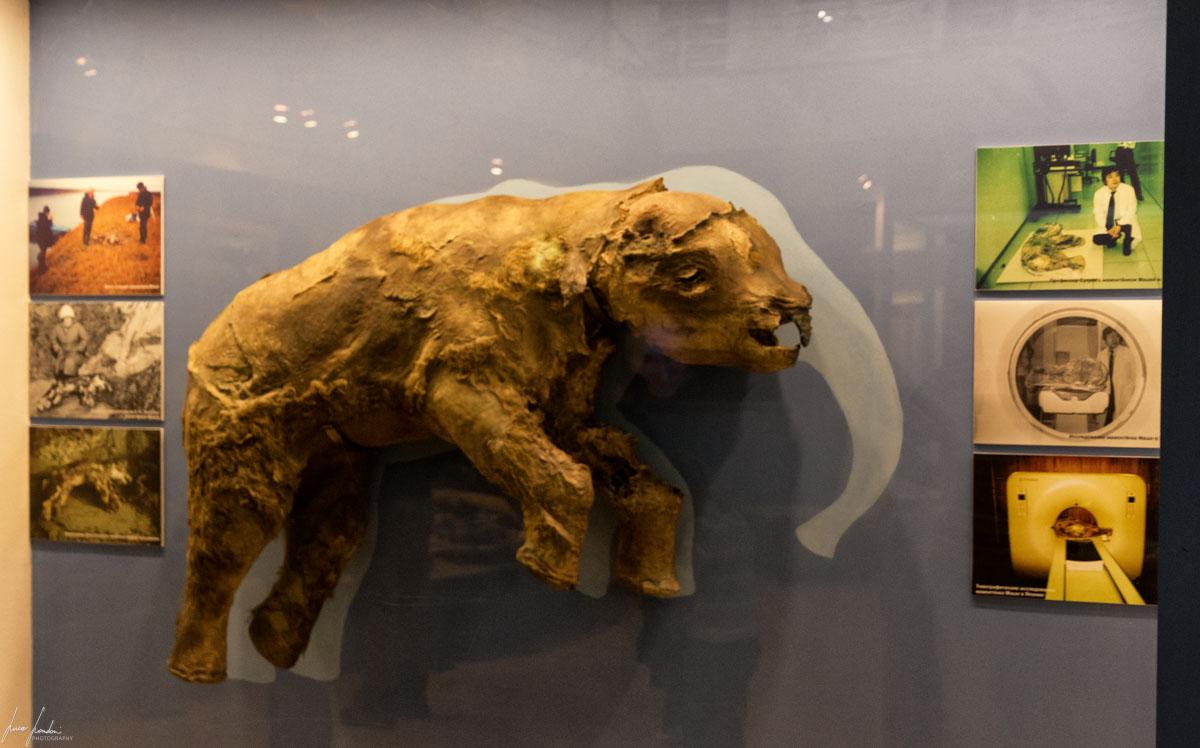 Salekhard: Shemanovskiy Yamal-Nenets District Museum