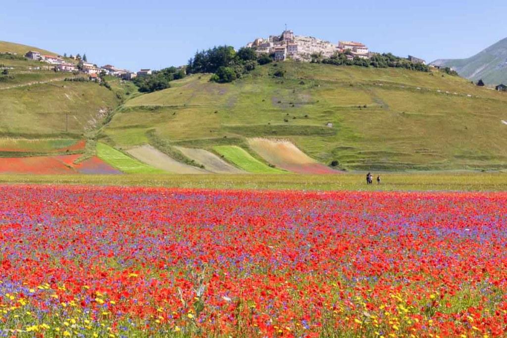 Borgo di Castelluccio di Norcia e la sua fioritura