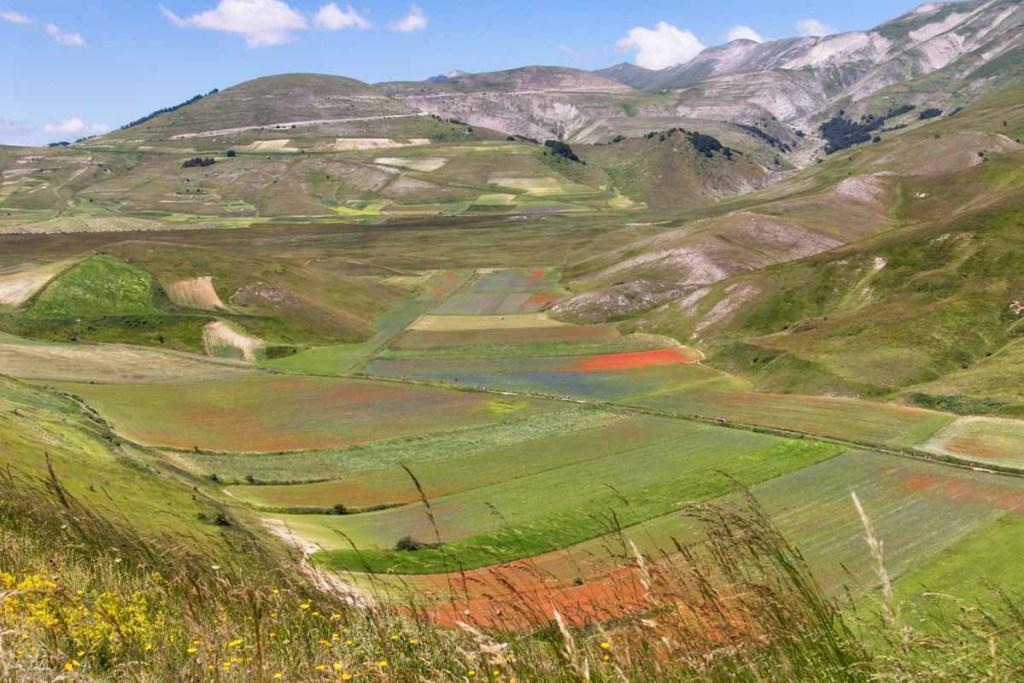 Fioritura di Castelluccio di Norcia: il Pian Perduto fiorito