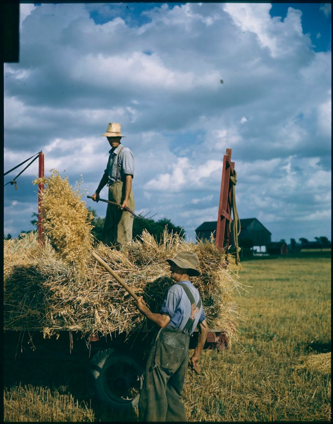 Harvesting oats on the Ed Euie farm near Collingwood, Ontario. On the racks is Ed Euie, pitching sheaves is Jack Bell. (1949)Canada. National Film Board of Canada. Photothèque, Library and Archives Canada, e010955655
