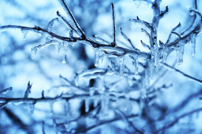 Branches under a thick layer of ice, with a blue tint.