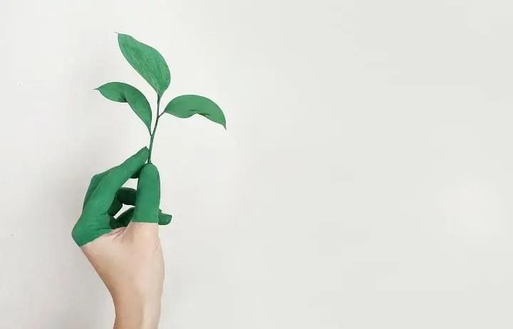Natur Nachhaltigkeit Nahrungsergänzung