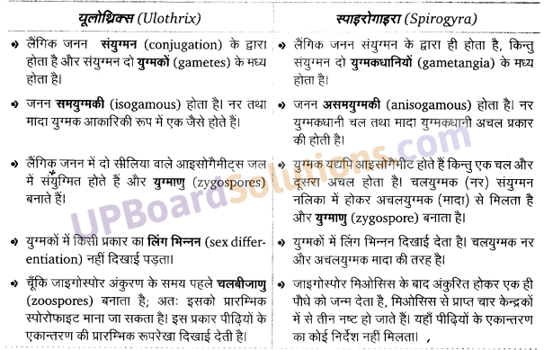 राइजोपस का चित्र UP Board Solutions For Class 11 Biology Chapter 3