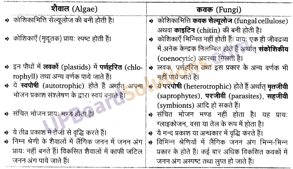 UP Board Solutions for Class 11 Biology Chapter 3 Plant Kingdomimage 13