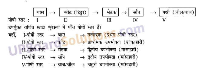UP Board Solutions for Class 10 Science Chapter 15 Our Environment img-1