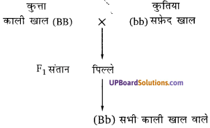 UP Board Solutions for Class 10 Science Chapter 9 Heredity and Evolution img-4