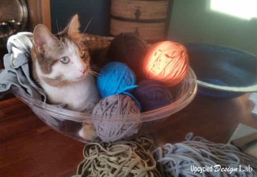 Cat in a bowl of t-shirt yarn