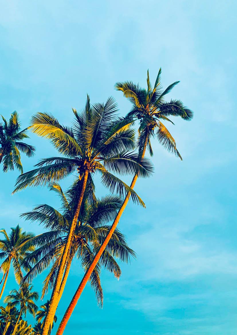 Poster 'Palms'