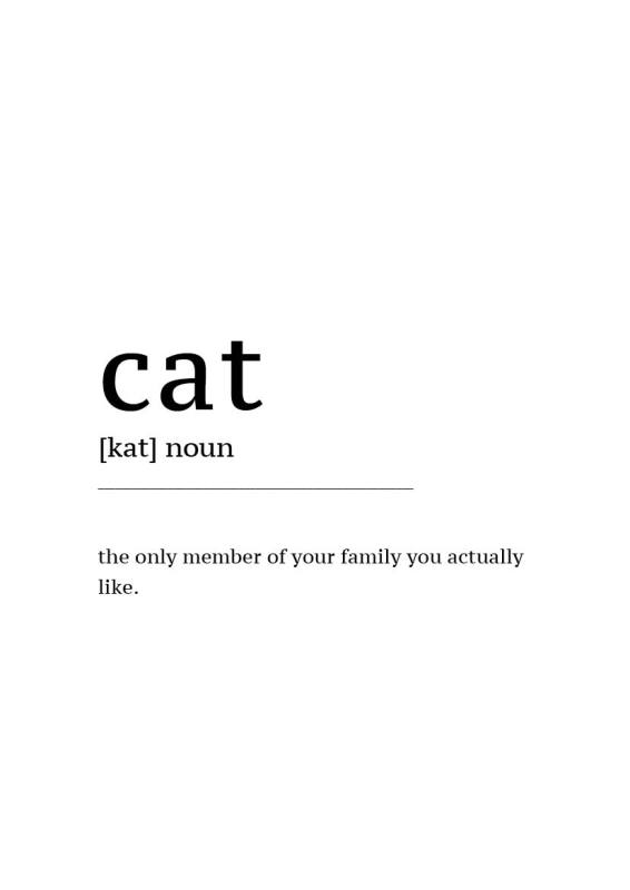 Gratis Poster download Definition Cat
