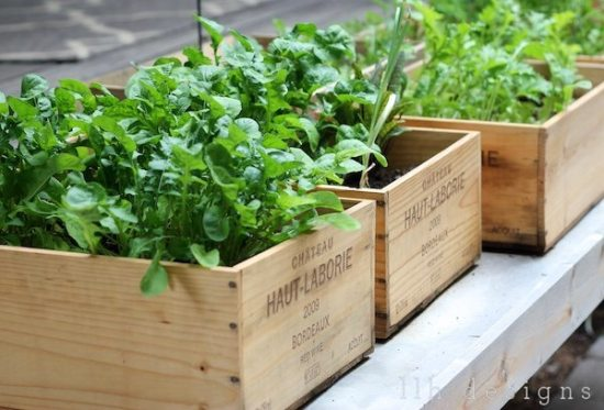 Upcycled garden ideas - wine crate planters