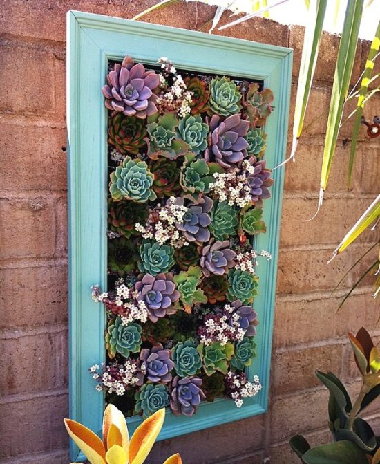 Repurpose old picture frames - succulent planter