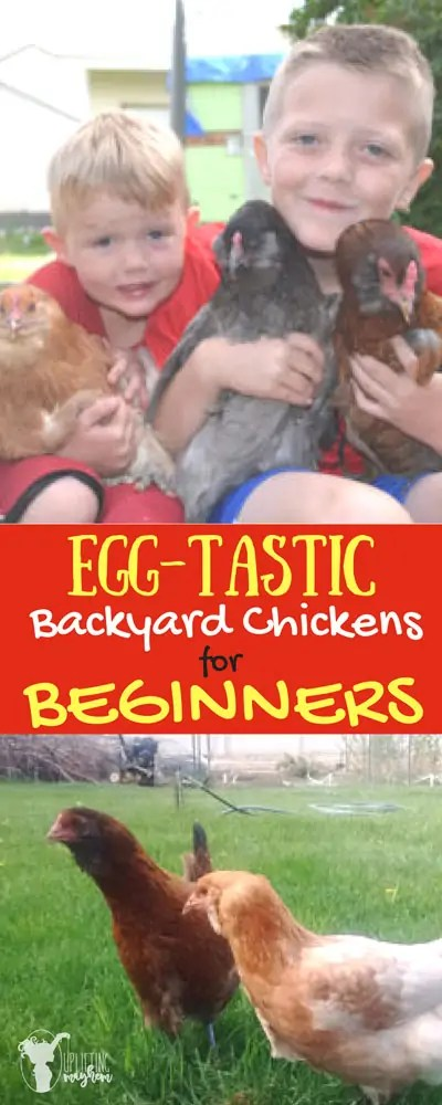 EGG-TASTIC Back yard chickens for Beginners