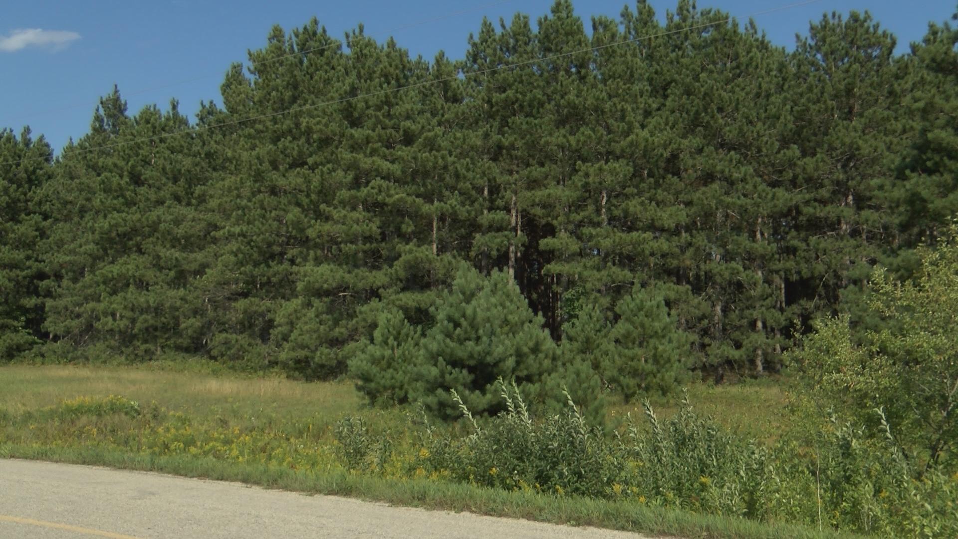 Hiawatha forest_1472847007627.jpg