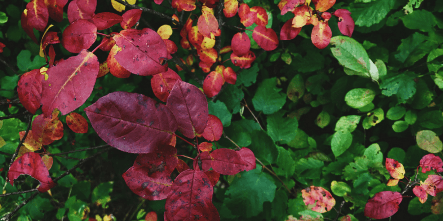 6 Tips for Autumn Self-Care - Cozy Blankets, Colorful Leaves and Pumpkin Spice Everything