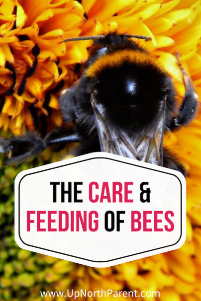 The Care and Feeding of Bees _ National Pollinators Week 2019