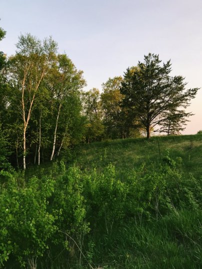 Site of Forest School in Breezy Point, MN