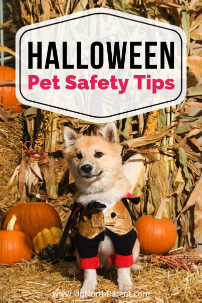7 Halloween Pet Safety Tips for our Pooches