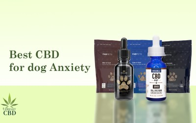 The Best CBD for Dog Anxiety and Much More
