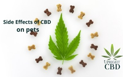 Side Effects of CBD on pets & What to Do?
