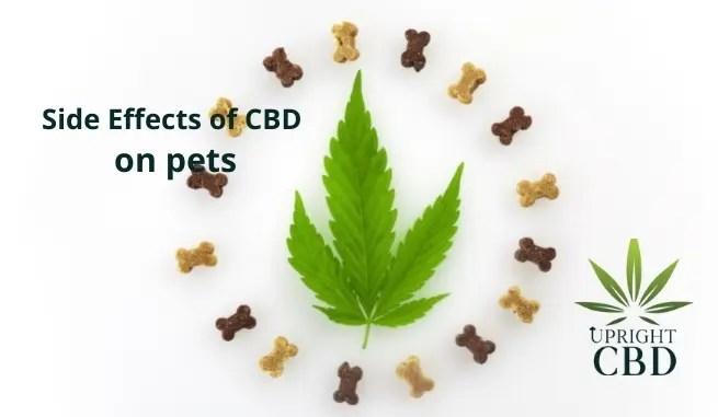 Side Effects of CBD on pets