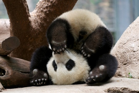 pictures of cute baby animals - Yun Zi