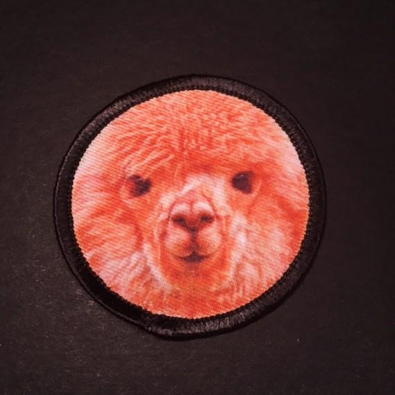 Alpaca_2