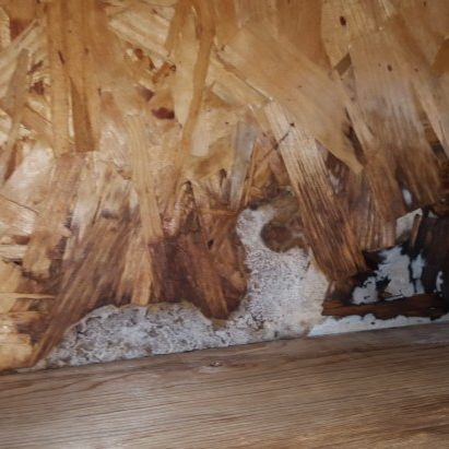 Upstate SC Mold Inspection Service