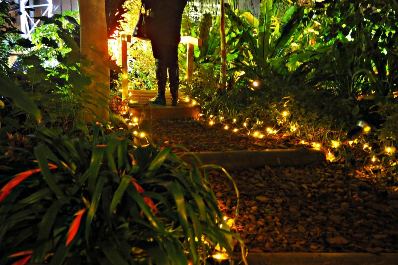 Fairy Light Bridge